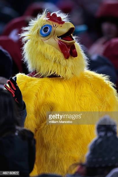 A fan for the Washington State Cougars wears a chicken suit during the game against the Washington Huskies in the 107th Apple Cup held at Martin...