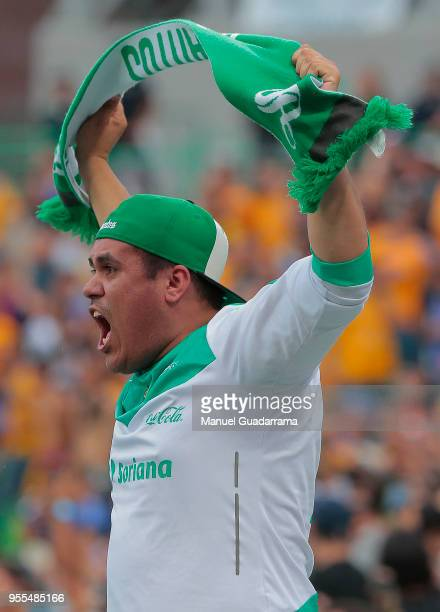 A fan of Santos cheers their team during the quarter finals second leg match between Santos Laguna and Tigres UANL as part of the Torneo Clausura...