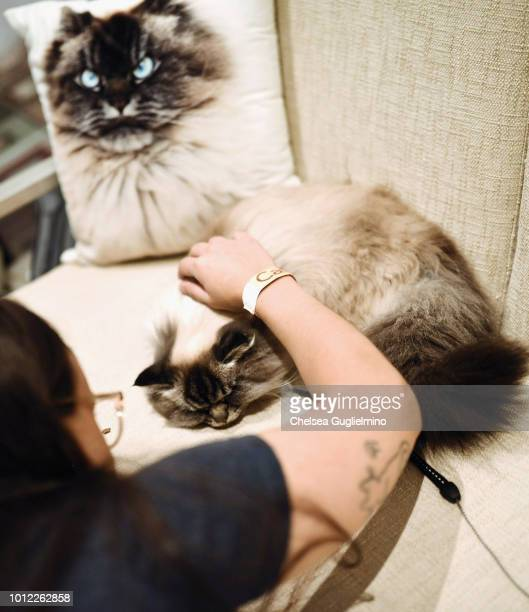 A fan pets Merlin Ragdoll in a meet and greet at CatCon Worldwide 2018 at Pasadena Convention Center on August 5 2018 in Pasadena California