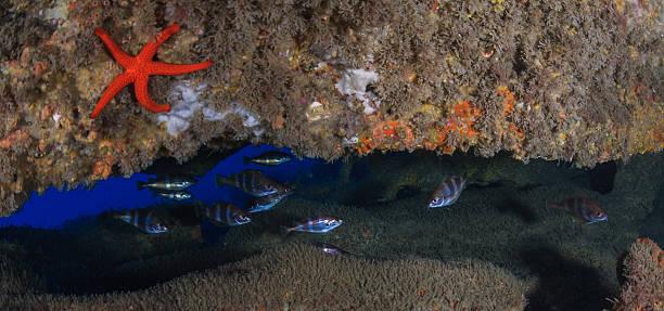 Fanecas Cave