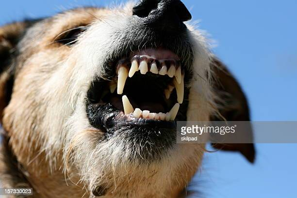 fangs of fury - dog cruelty stock pictures, royalty-free photos & images