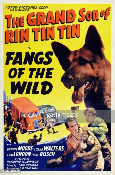 Fangs Of The Wild poster US poster art top right Rin Tin Tin Jr bottom second right Dennis Moore 1939