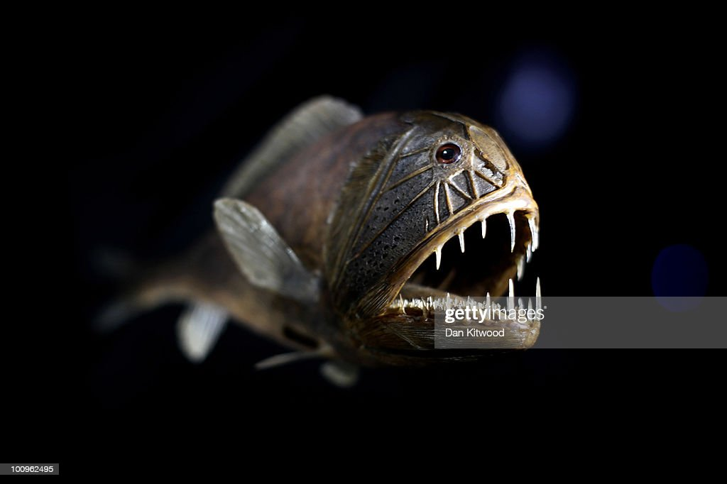 Deep Sea World Displayed At the Natural History Museum's Latest Exhibition : News Photo