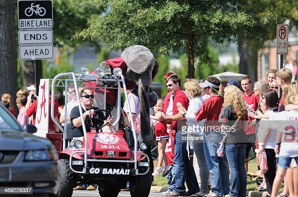 fans and big al in university of alabama homecoming parade - tuscaloosa stock pictures, royalty-free photos & images