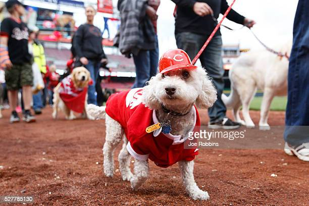 Fans bring their dogs onto the field during the season's first Bark in the Park before the game between the San Francisco Giants and Cincinnati Reds...