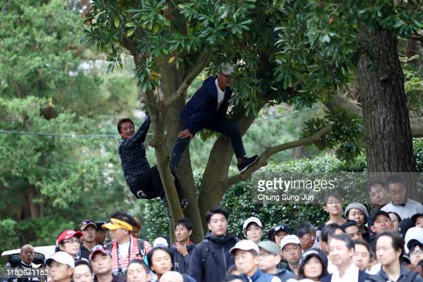 Fans climb a tree to see Tiger Woods of the United States on the 5th green during the third round of the Zozo Championship at Accordia Golf Narashino...