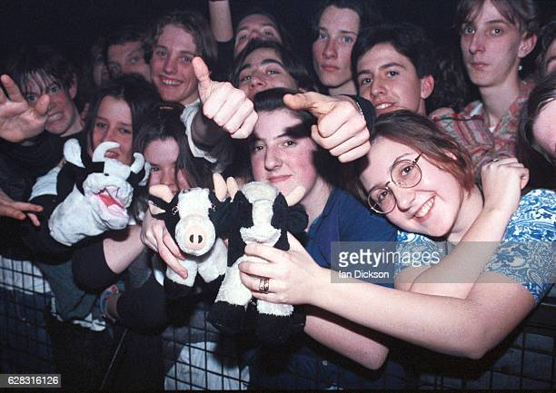 Fans in early 1990s indie fashions holding up cow soft toys in the front rows of the audience at a gig, United Kingdom, 1991.