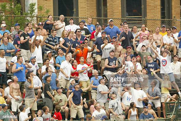 Fans of the Chicago Cubs reach for a home run ball during the game against the Boston Red Sox at Wrigley Field on June 10 2005 in Chicago Illinois...