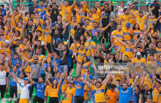 Fans of Tigres cheer for their team during the quarter finals second leg match between Santos Laguna and Tigres UANL as part of the Torneo Clausura...