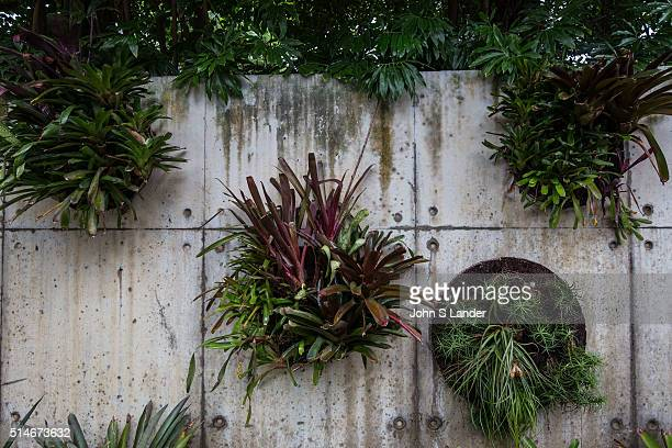 Fans of vertical gardens or green walls say governments should provide incentives for green initiatives as they save energy consumption by reducing...