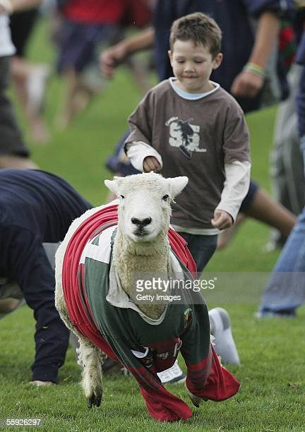 Fans participate in sheep wrestling as part of the half time entertainment during the NPC third division final match between Wairarapa Bush and...