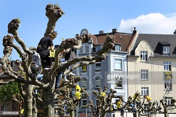 Fans sitzen auf den Bäumen und jubeln der Mannachsft zu Double Sieger Doublesieger Meister und Pokal Sieger Borussia Dortmund 2012 auf den Autokorso...