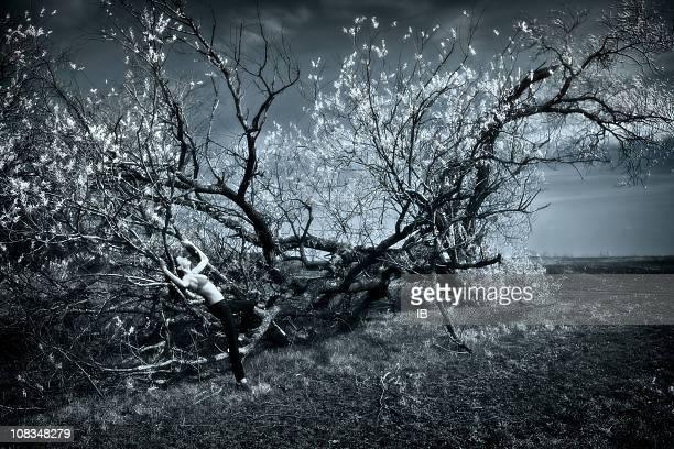 見事な花咲く木々や少女のエクスタシー-被害者
