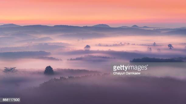 fantastic foggy forest and mountain with pine tree in the sunlight - bruma de calor fotografías e imágenes de stock