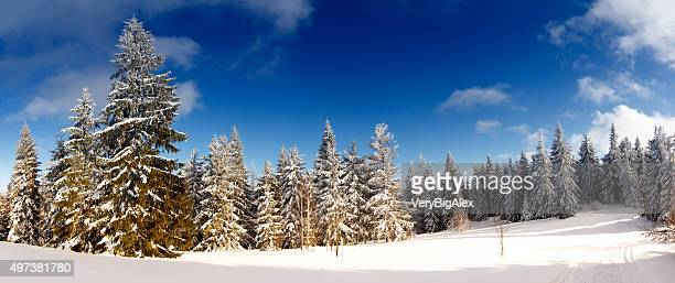 Fantástico paisaje de invierno. Cielo azul. Carpathian, Ucrania, Europa. Belleza mundo.