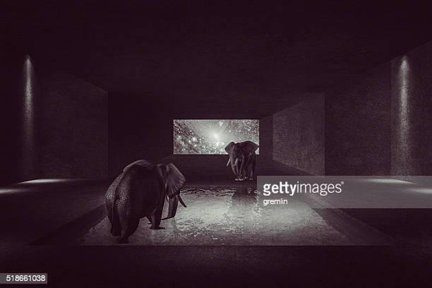 Fantasy elephant walking in spaceship