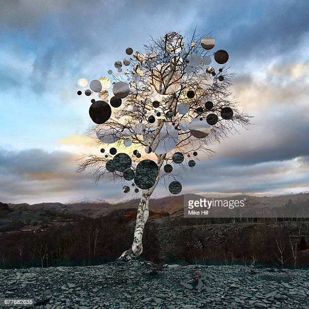 Fantasy Tree in a Quarry