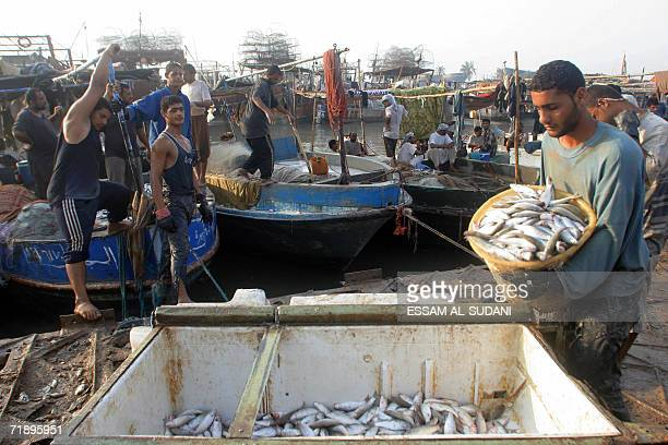 Iraqi fishermen loads the fish netted imto containers at a harbor in the city of Fao south of Baghdad 14 August 2006 The Most of the fish caught in...