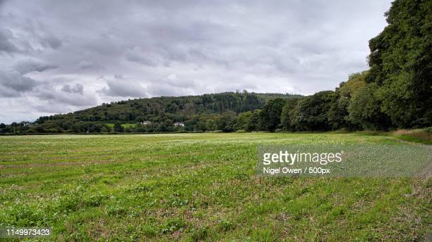 far hill - nigel owen stock pictures, royalty-free photos & images