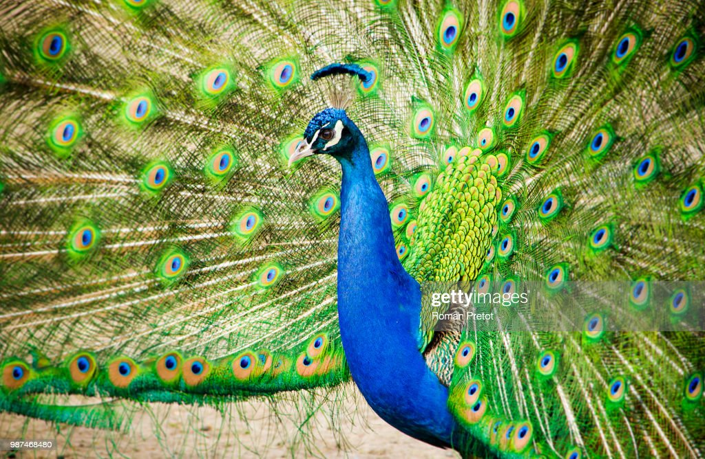 Farbenpracht / Blaze of colour : Stock Photo