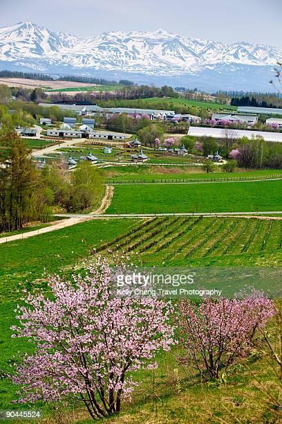 Farm and Mountains