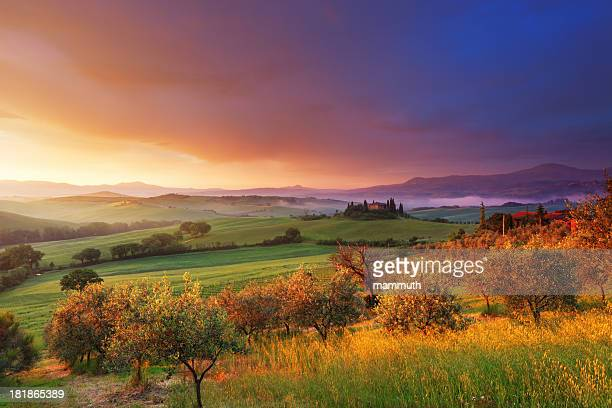 farm and olive trees in tuscany at dawn - green olive stock photos and pictures