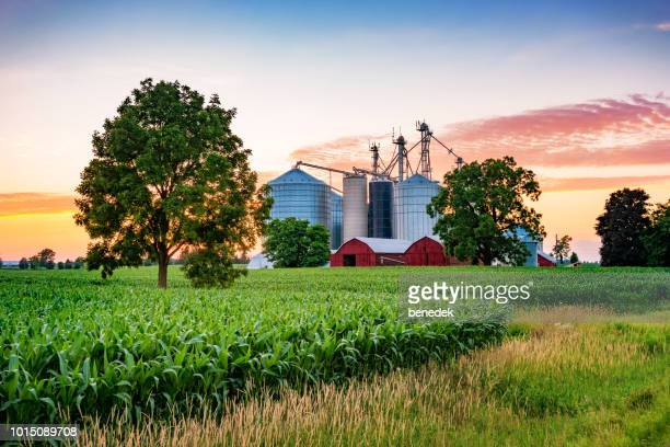 farm at sunset near brantford southwestern ontario - ontario canada stock pictures, royalty-free photos & images
