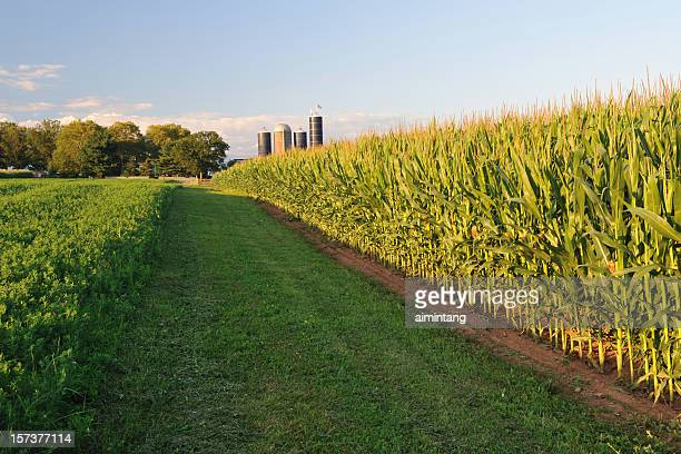 Bauernhof im Sonnenuntergang