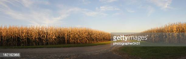 farm corn panoramic - corn stock pictures, royalty-free photos & images