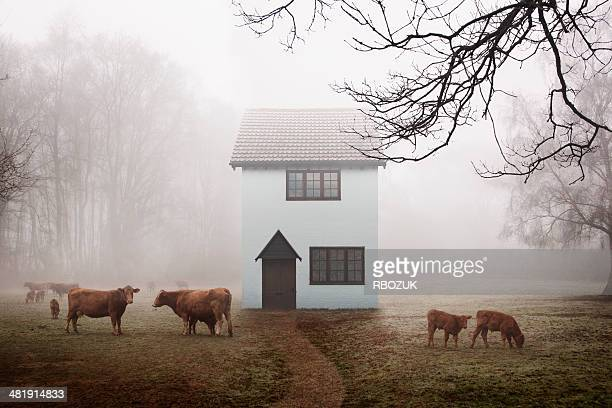 Farm Cottage in Field
