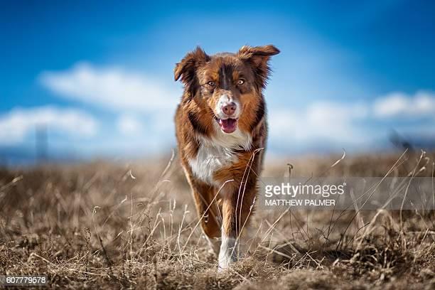 Farm dog in field