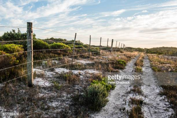 farm fence amongst coastal duneveld vegetation, de mond nature reserve, western cape, south africa - fynbos fotografías e imágenes de stock