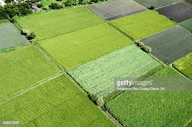 Farm Fields at Morelos