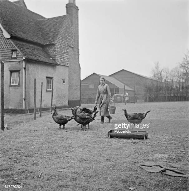 Farm girl feeds domestic turkeys in a pen beside the farmhouse at Ernest Smith's arable farm near Ware in Hertfordshire, England during World War II...
