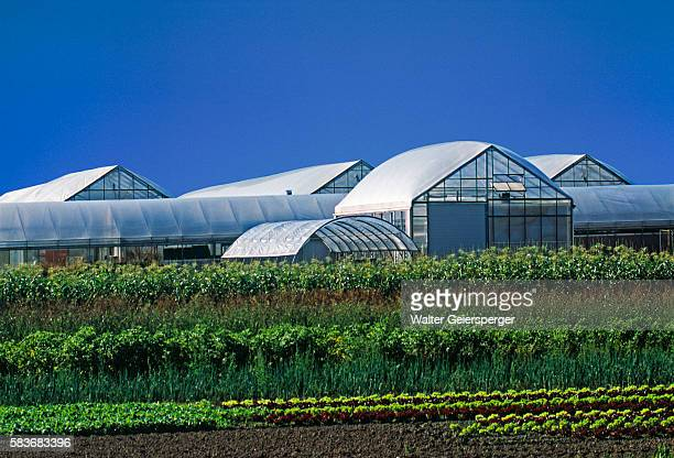 farm greenhouses - red bull arena salzburg stock pictures, royalty-free photos & images