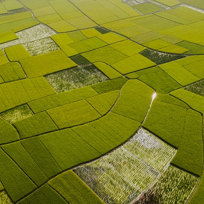 Farm grid in China - gettyimageskorea