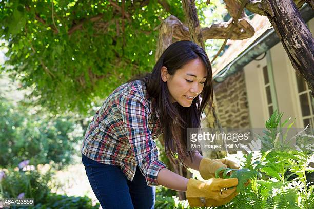 A farm growing and selling organic vegetables and fruit. A young woman working.