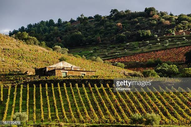 farm su casa rodeado de viñedos y olivares - ogphoto fotografías e imágenes de stock