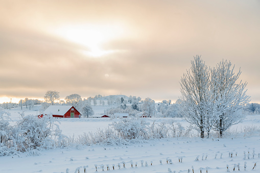 Farm in a rural winter landscape with snow and frost 880852228