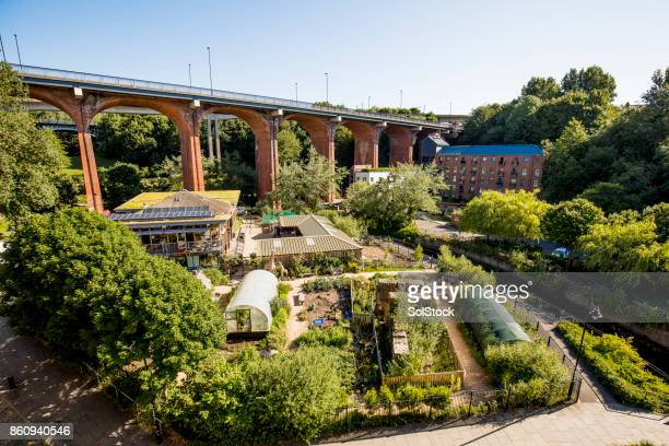 farm in the city - urban garden stock pictures, royalty-free photos & images