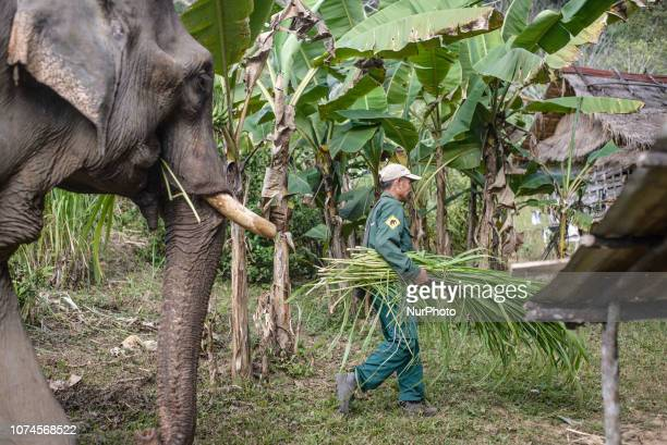 Farm in the Elephant Conservation Center where elephant food is grown Sayaboury Laos in December 2018 Laos was known as The land of a million...