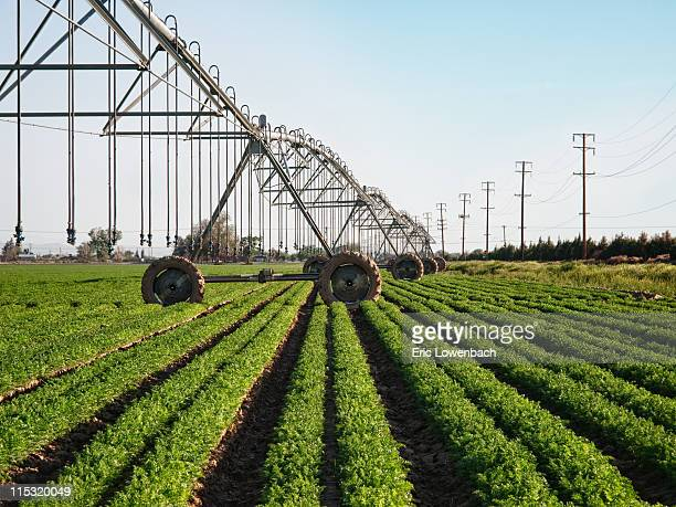farm irrigation - sprinkler system stock pictures, royalty-free photos & images