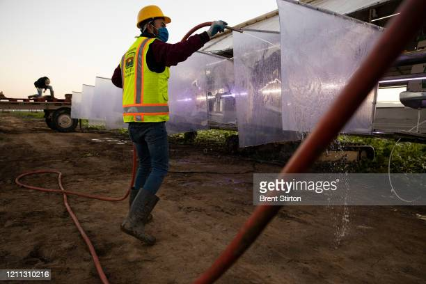 A farm laborer with Fresh Harvest hoses down a harvesting machine for romaine lettuce with heavy duty plastic dividers that separate workers from...