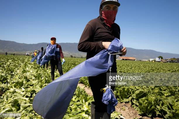Farm laborers from Fresh Harvest working with an H2A visa line up to get lunch on April 27 2020 in Greenfield California Fresh Harvest is the one of...