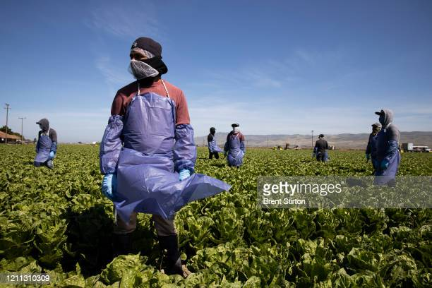 Farm laborers from Fresh Harvest working with an H-2A visa maintain a safe distance as a machine is moved on April 27, 2020 in Greenfield,...