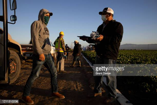 Farm laborers from Fresh Harvest working with an H2A visa receive masks before harvesting on April 28 2020 in Greenfield California After washing...