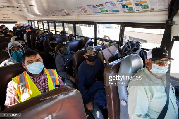 Farm laborers from Fresh Harvest working with an H2A visa ride the bus after their shift on April 27 2020 in Greenfield California Fresh Harvest is...