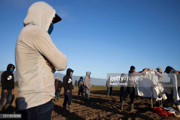 Farm laborers with Fresh Harvest arrive in the early morning to begin harvesting on April 28 2020 in Greenfield California After washing their hands...