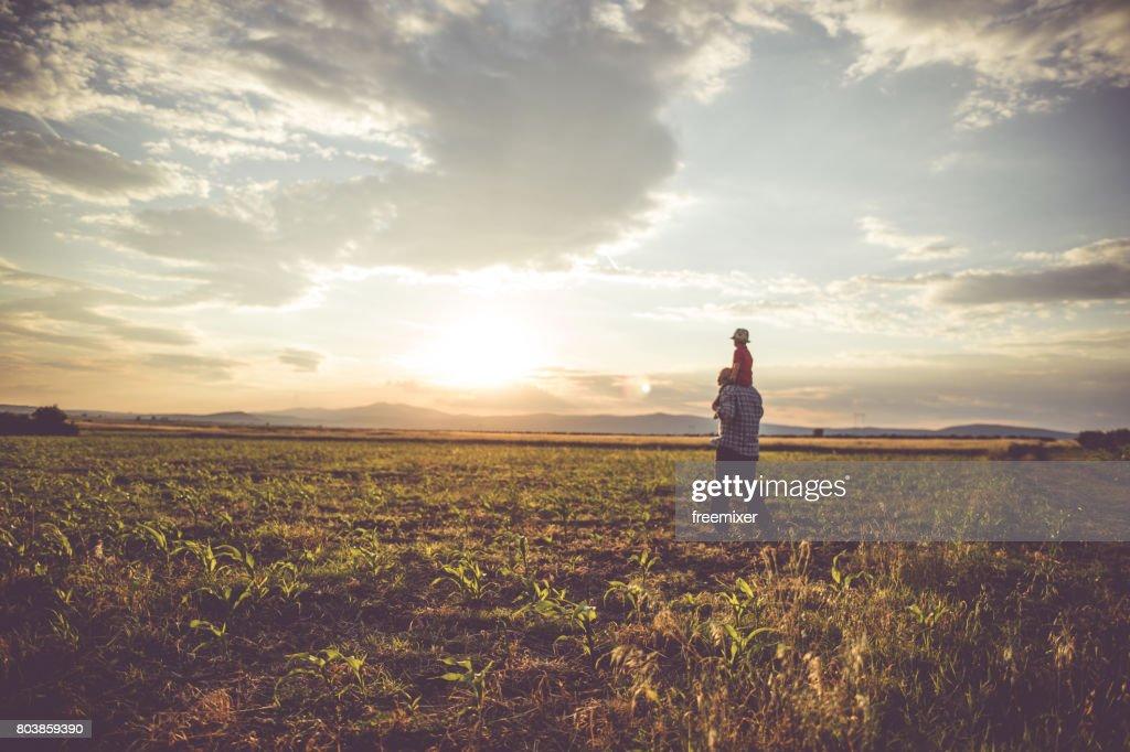 Farm landscape : Stock Photo