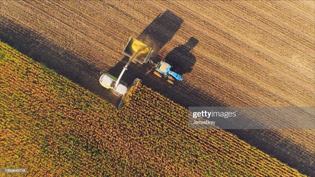 Farm machines harvesting corn, aerial view. : Stock Photo